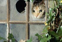 Cat's Meow ~ I love cats. / by Karen Lambert