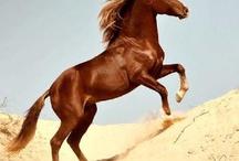 I love horses! / by Carole Pray