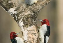 and woodpeckers / by Paula Metzinger