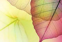 Leaves / by JuiceARollOfCandy