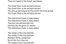 Rainforest Kindergarten / by Stacy Vernon