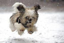 dogs / by Lisa Morris Luper
