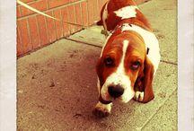 Ain't nuthin but a hound dog / by Turning Leaf Crafts /Laura Locke
