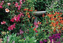 outdoors/Gardening / by Pat Olson