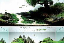 Amano / Japanse Aquaria Artlandscapes / by Josephine Baker