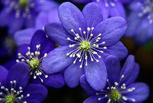 Flowers! / by I X