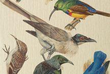book of birds / by Nabila H.