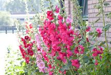 In the Garden... / by Nancy Irish