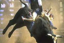 """8 sec / Bull Riding is the most recognized and popular of all the rodeo events. It is also the most dangerous. An often quoted saying about bull riding is """"it's not if you get hurt, it's when.""""    / by ~Cowgirl Lisa~"""