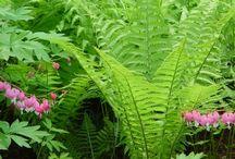 My Wanna B Garden  / by Tina Hempel