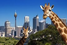 Adorable Zoo Animals / From feeding giraffes in Tampa Bay to spending time with the kangaroos at Steve Irwin's beloved Australia Zoo, our Budget Travel audience shares their all-time favorite zoos and animal encounters. Plus, more adorable zoo animals you won't want to miss! / by Budget Travel