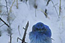 Birds / by myrna fletcher