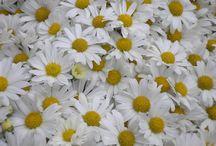 Flowers / by Anliet Milke