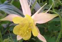 Blooms Garden / Photos of my flowers / by Sue Decker-Klein