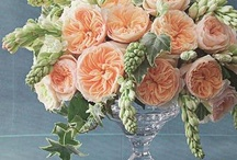 Wedding: peach and a touch of taupe! / by Ellen Bartlett (Cakes to Remember)