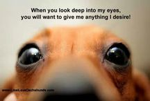 dachshund love / by Kenzie Rawlings