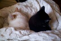 cats / by Kari Rettig