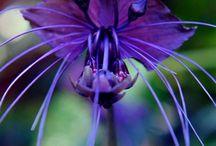 Flowers / by Joanne Anderson-Beaty