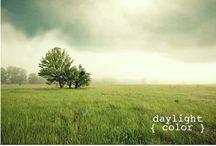 Color Inspiration / by Elizabeth Golob