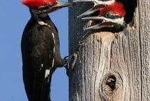 Birds / by Shirley Garofalo