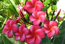 """My """"aloha""""  / by Antoinette Todd"""
