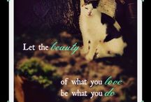 Cat Photo Quotes / by Cat Wisdom 101