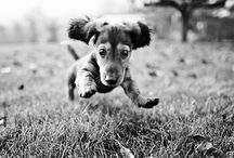 Dachshunds Steal My Heart / by Liz Rascher