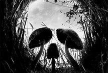 Mushrooms / Varieties of mushrooms. / by guioximitsu DarkStar