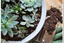 Gardening / by Natalie Pixiedub