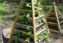 garden ideas / by Laure Swain