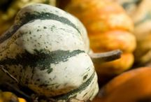 Grains/Gourds / by Grain Foods Foundation