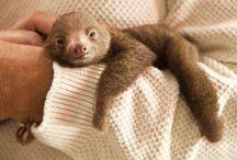Sloth Lovin' / by Megan Bashore
