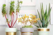 Plants / by Amy Winter Spann