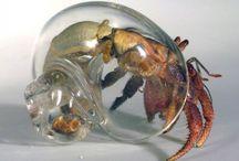 Hermit crabs! / by Hollie Dormer Orr