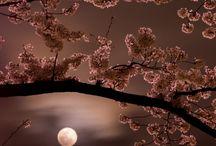 Moonlighting / by Nish