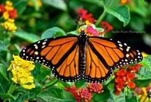 Butterflies  / by Christie Davis
