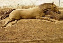 Sand Design / Sand-castles and Sand-art / by Irene Gramlich