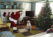 Holiday Fun / by Essie Robinett