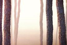 Freebies / by Ronen Bekerman