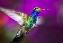 Hummingbirds / by Tammy Carroll