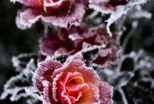 Nature's  Spledor / by Effie Smith