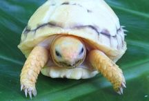 my tortoise obsession / by Hannah Brenner