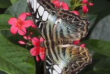 Butterflies / by Claudia Chaves Saenz