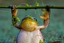frogs / by Amanda Briede