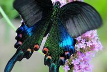 Animals I love / by Pam Critchfield