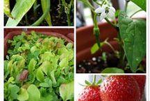 Vegetable Gardening / by Debbie Nolan