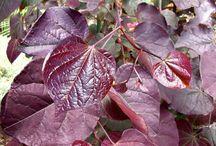 Pretty plants / by Marcia Swain