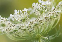 Flora / by Stitchin Post