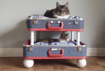 For the Cats & DIY / by Ketrah Sunkel