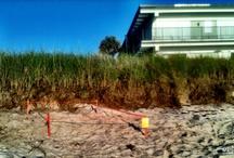 Sea Turtles / Sea Turtle nesting season in Vero Beach, FL / by Margo Arnold